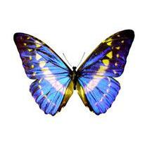Sticker papillon bleu et jaune