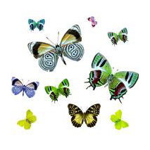 Stickers kit de papillons voiture