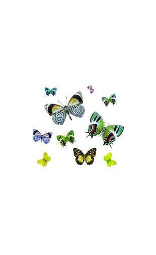 stickers kit de papillon autocollant pas cher. Black Bedroom Furniture Sets. Home Design Ideas