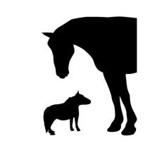 Sticker chevaux