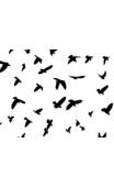 Kit stickers d'oiseaux