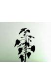 Sticker plante