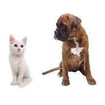 Sticker Comme chien et chat