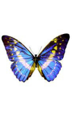 Sticker papillon bleu et jaune