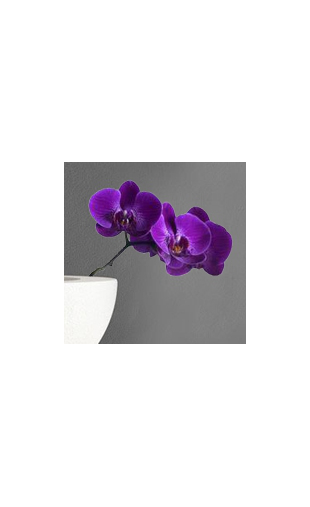 Sticker orchidée violette