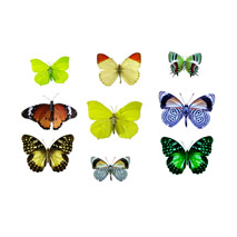 Sticker kit de papillons 2